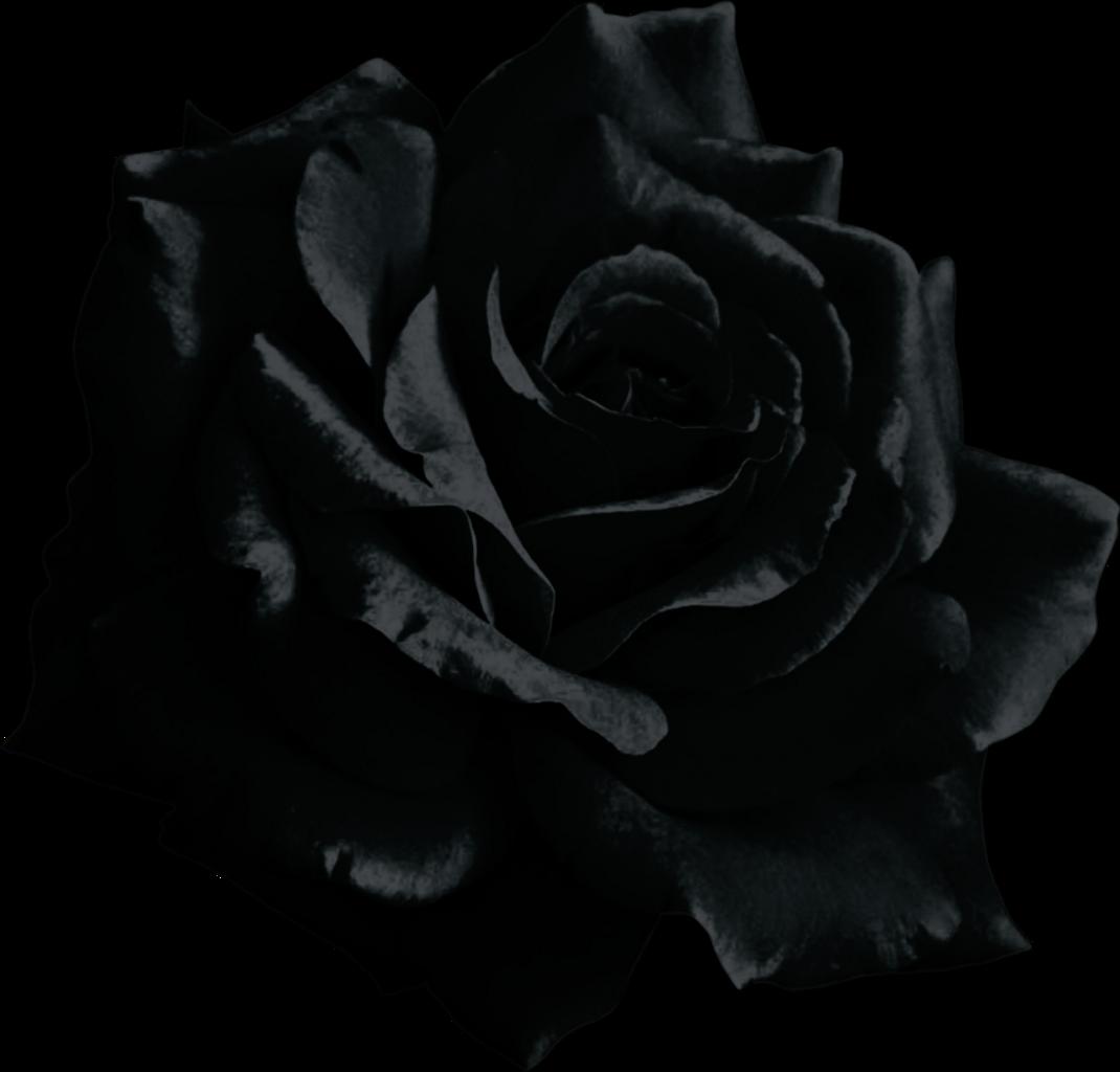 Black Rose Transparent Background & Free Black Rose ... - Beautiful Black and White Roses