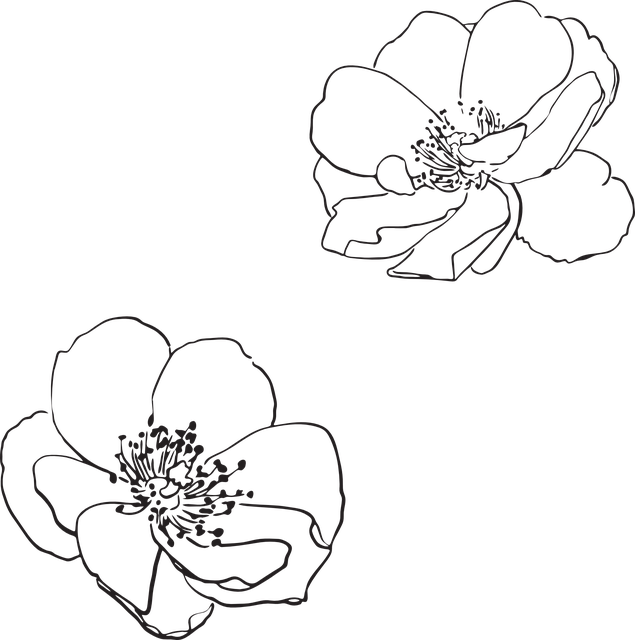 Free vector graphic Rose Wild Flower Flowers  Free