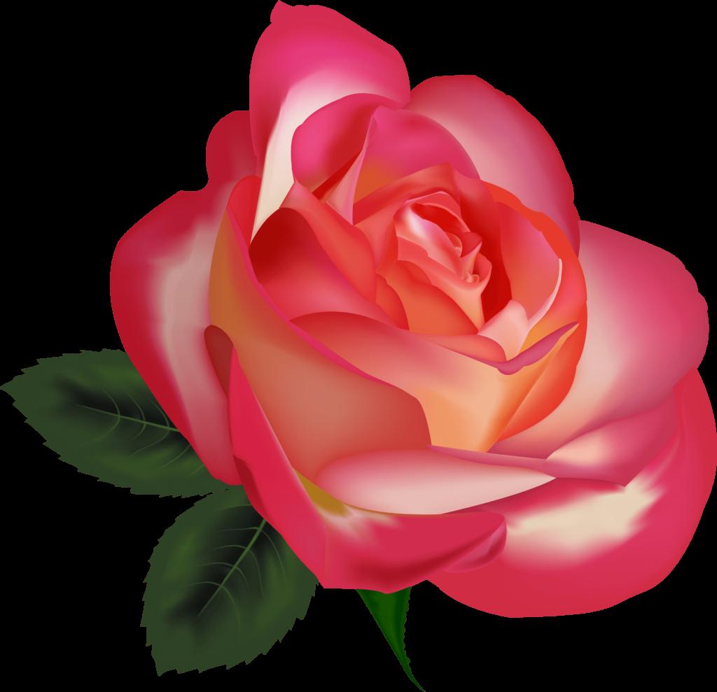 Beautiful Rose Clip Art Clipart Free Download  Realistic