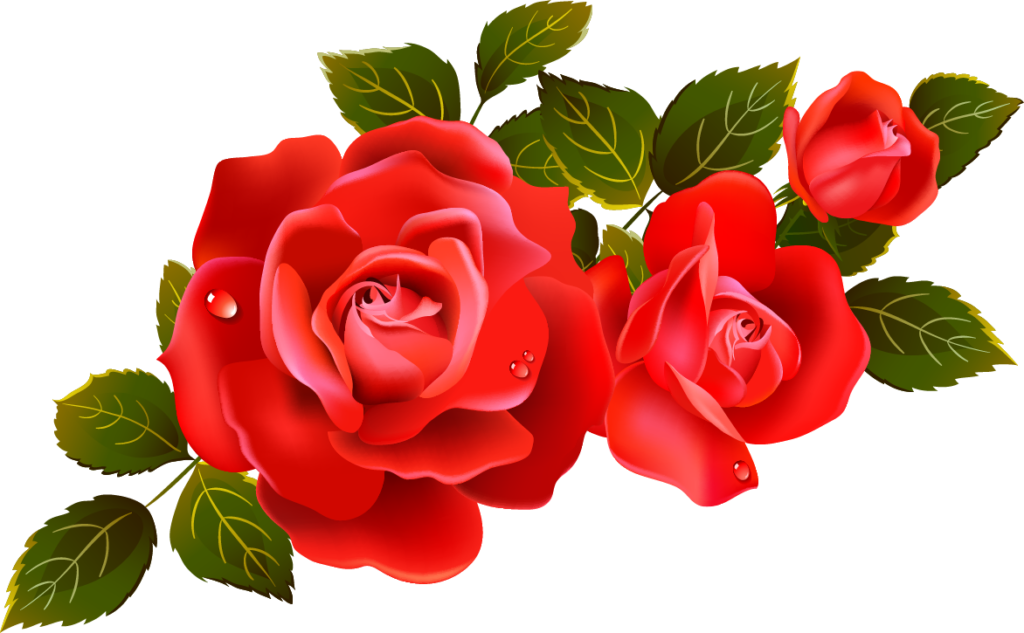 Rose Pictures Images Graphics for Facebook Whatsapp