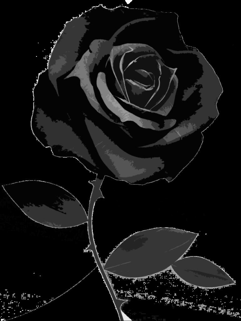 Black And White Rose Wallpaper  WallpaperSafari