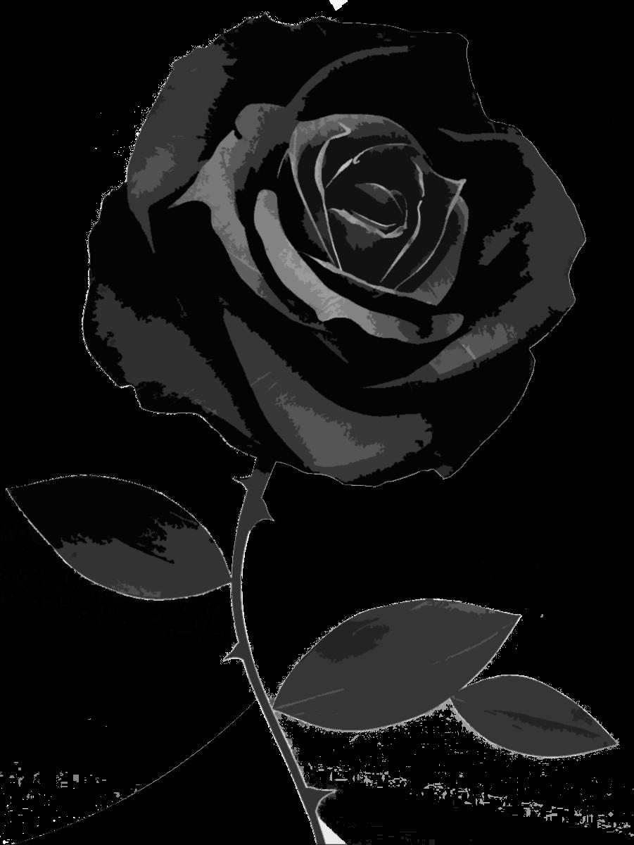 Black And White Rose Wallpaper - WallpaperSafari - Beautiful Black and White Roses