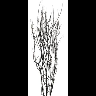 Twinkly Twigs 36 23 stem Black  Twig Stem Black glitter