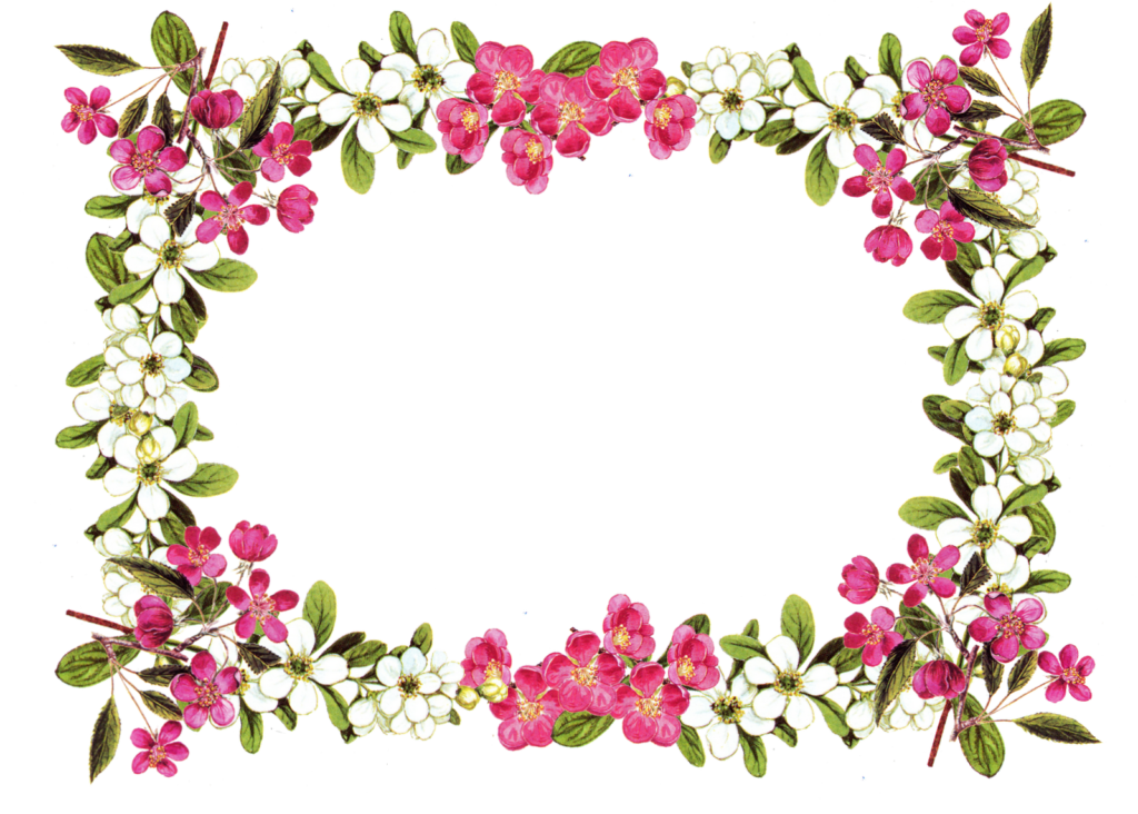 Black And White Flower Border Clipart  Free download on