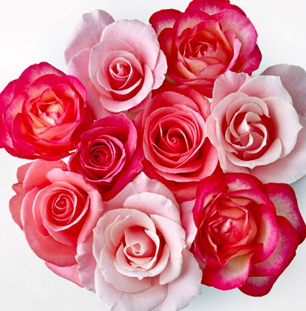 Fleur Roses