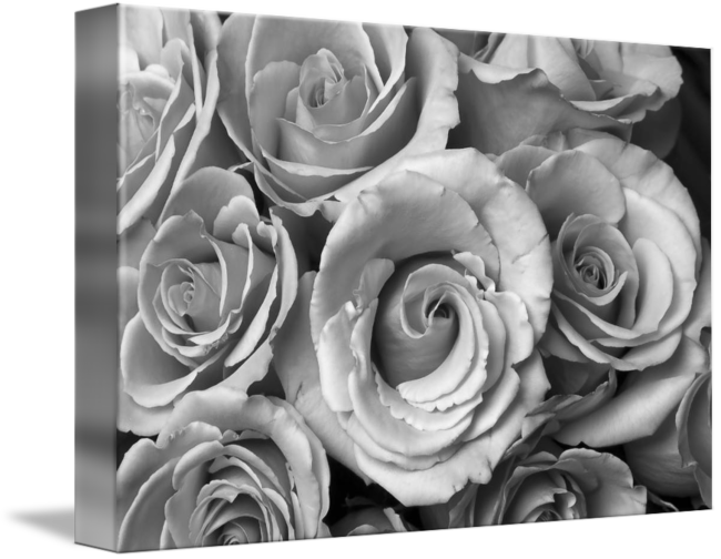 Rose Bouquet in Black and White by James BO Insogna