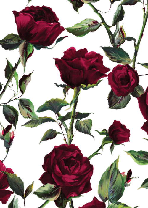 transparent roses  Tumblr
