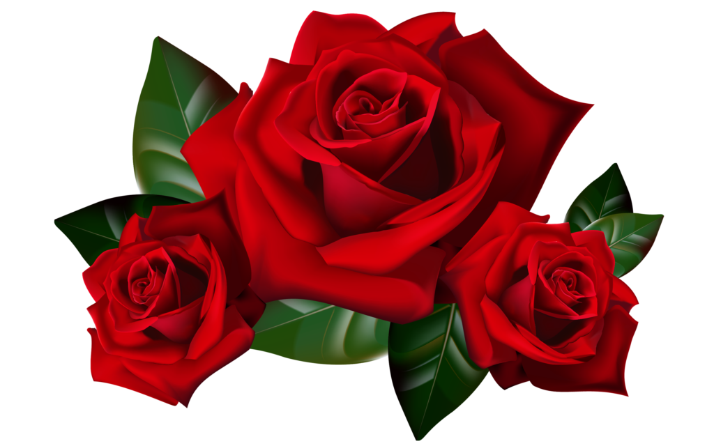 Rose Clipart No Background  Free download on ClipArtMag