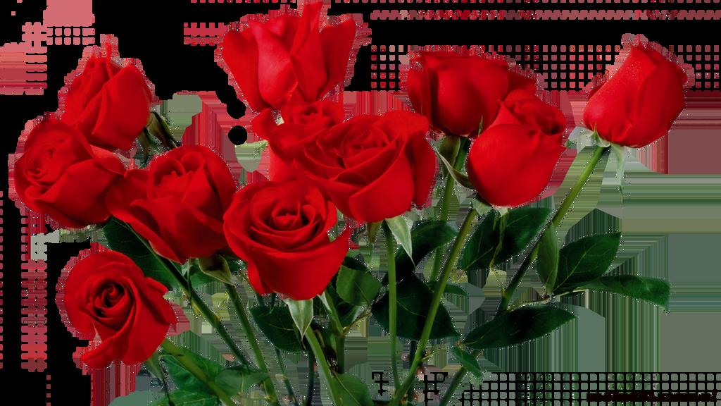 ROSE Render PNG by bibo2203 on DeviantArt