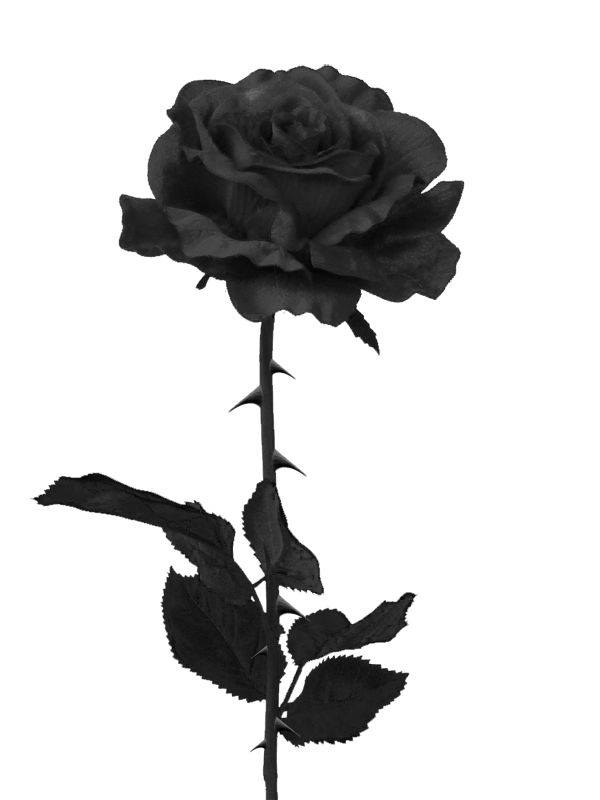 Black And White Pictures Of Roses  Clipartsco