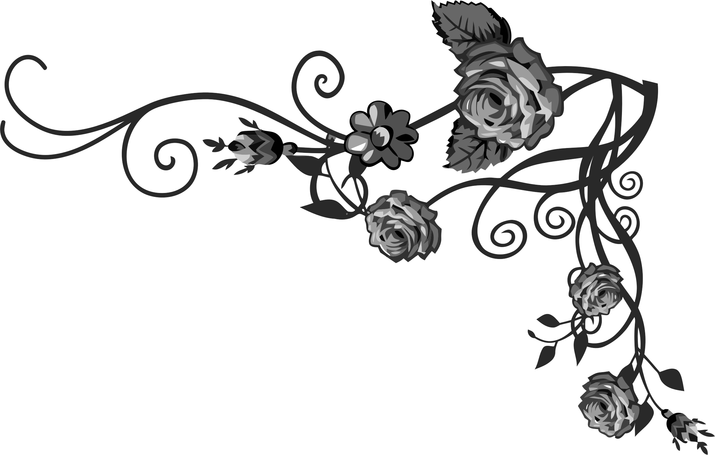 Flourishes clipart vine, Flourishes vine Transparent FREE ... - Black Rose Graphic