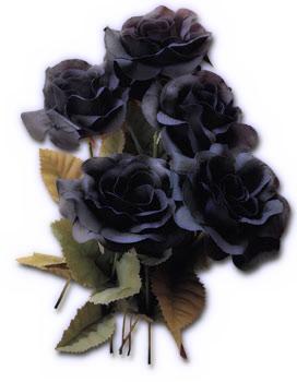 tubes roses  Page 4  Black rose flower Black rose