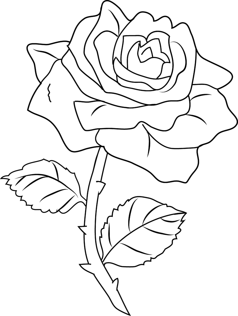 Free Line Drawing Of A Rose Download Free Clip Art Free
