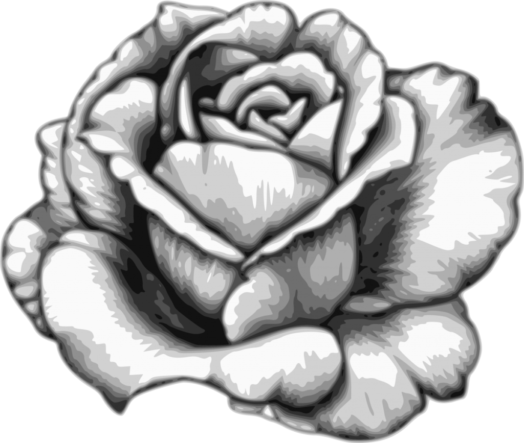 Download Drawing Flower Watercolor Black White  Rose