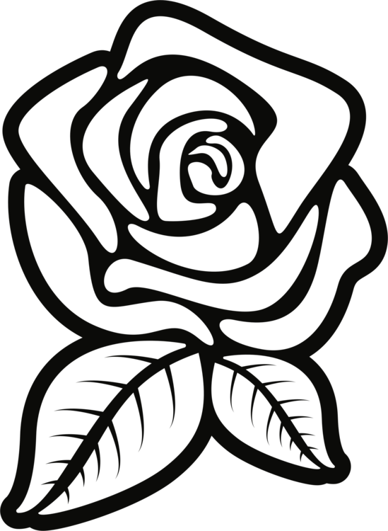 Black Rose Drawing  Free download on ClipArtMag