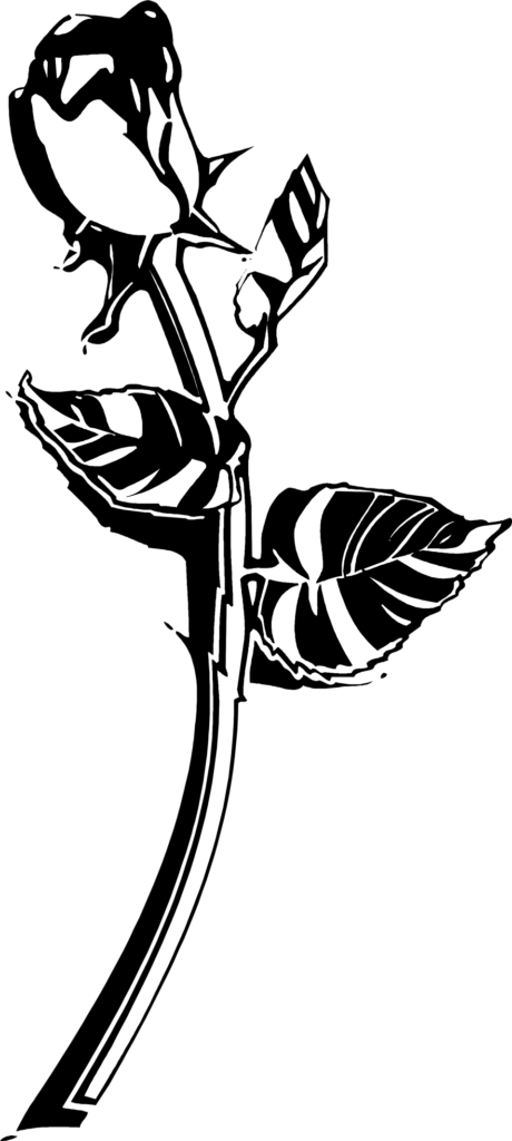 Rose  Free Stock Photo  Illustration of a long stem rose