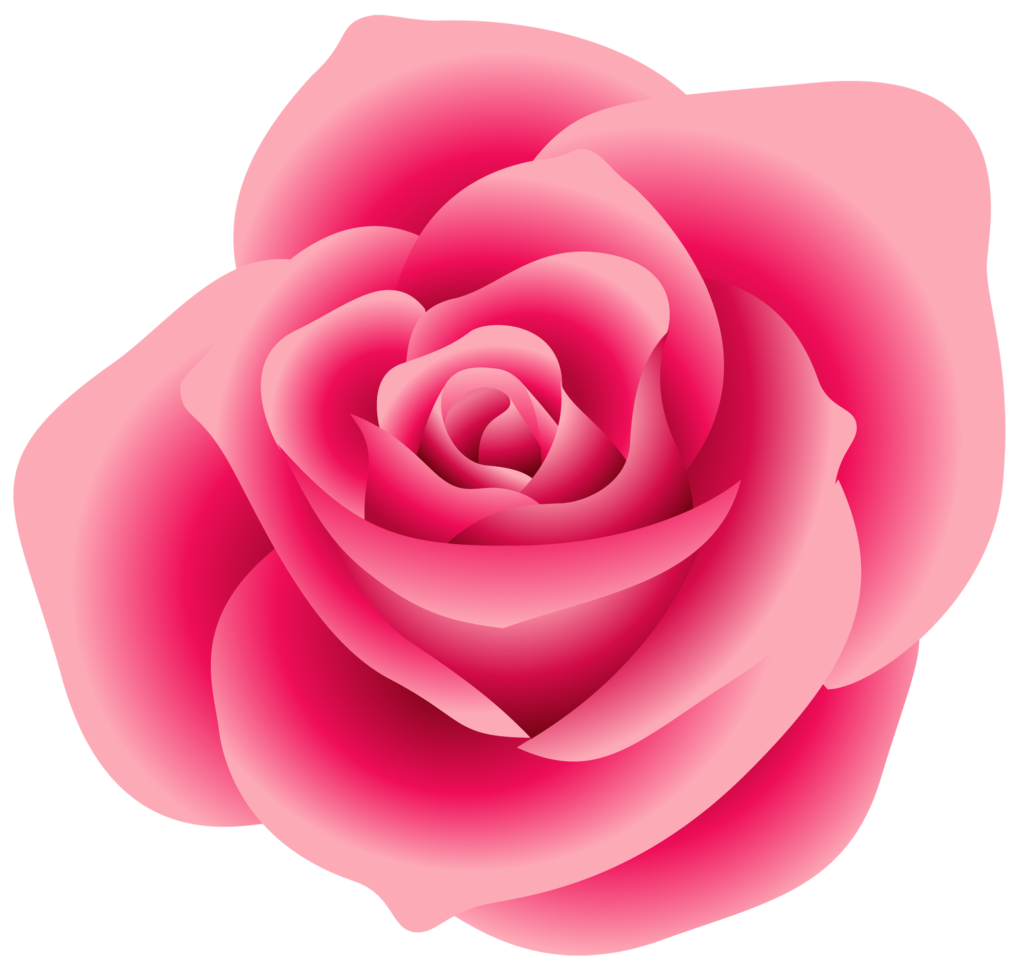 rose  Google Search  FLOWERS  Pinterest  Pink roses