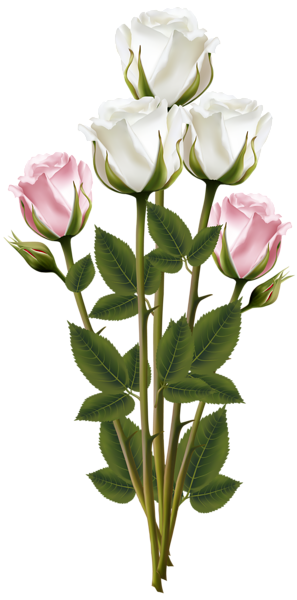 White and Pink Rose Bouquet Transparent PNG Clip Art Image