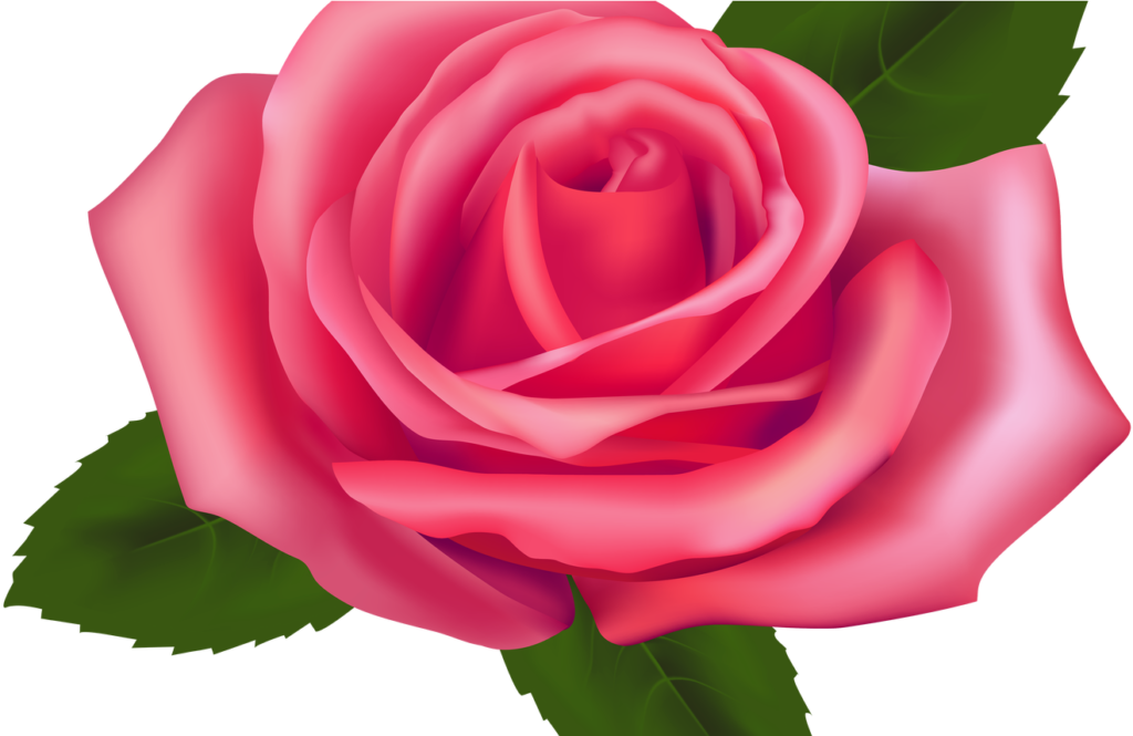 19 Roses Clip Black And White Garden Rose Huge Freebie