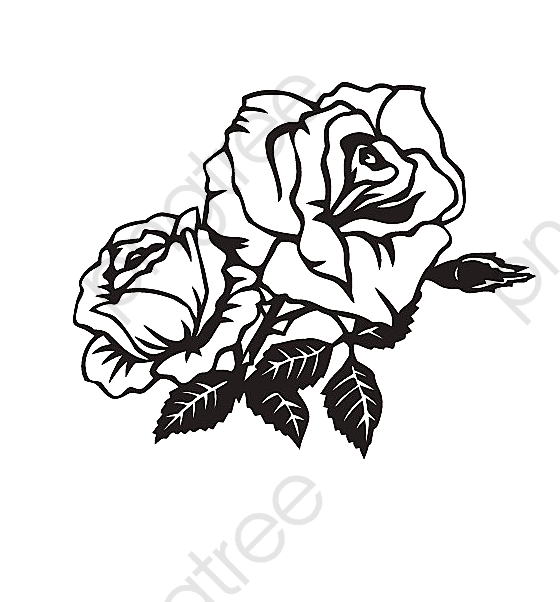 Two Black And White Roses Angle Trim Black And White