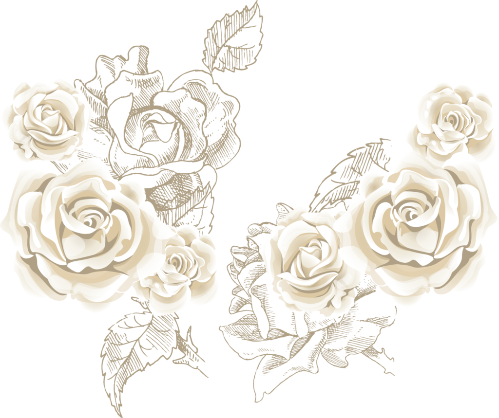 White Rose Vector at GetDrawings  Free download