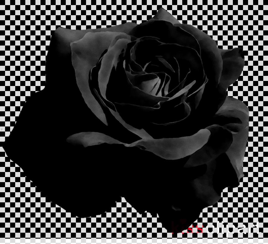 Black Roses Transparent  Free Black Roses Transparentpng