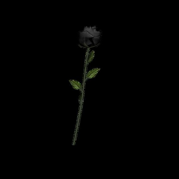 Black Rose PNG by httpskarahrobinsonartdeviantartcom