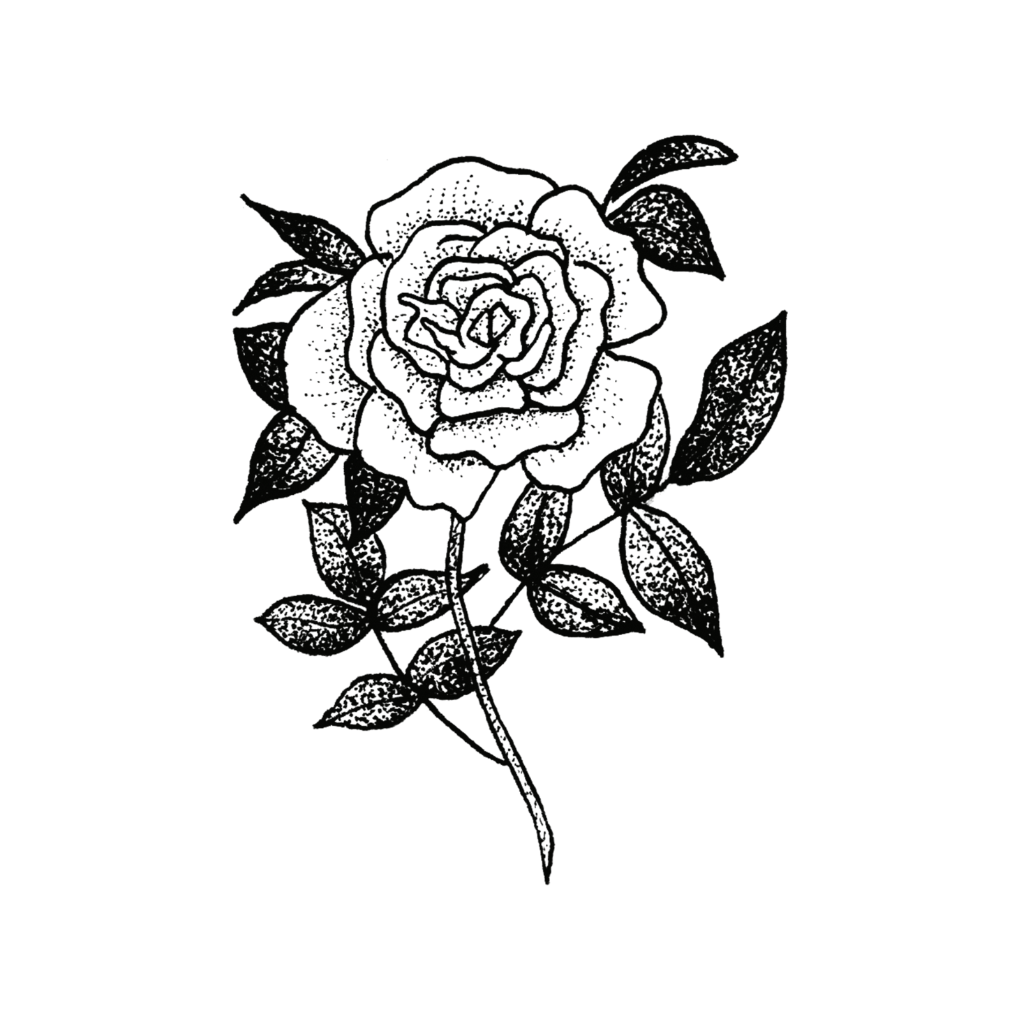 Rose by Tea Leigh from Tattly Temporary Tattoos - Black and White Rose Design