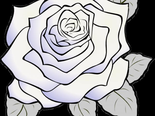 Rose Flower Outline Clip Art Free  Best Flower Site