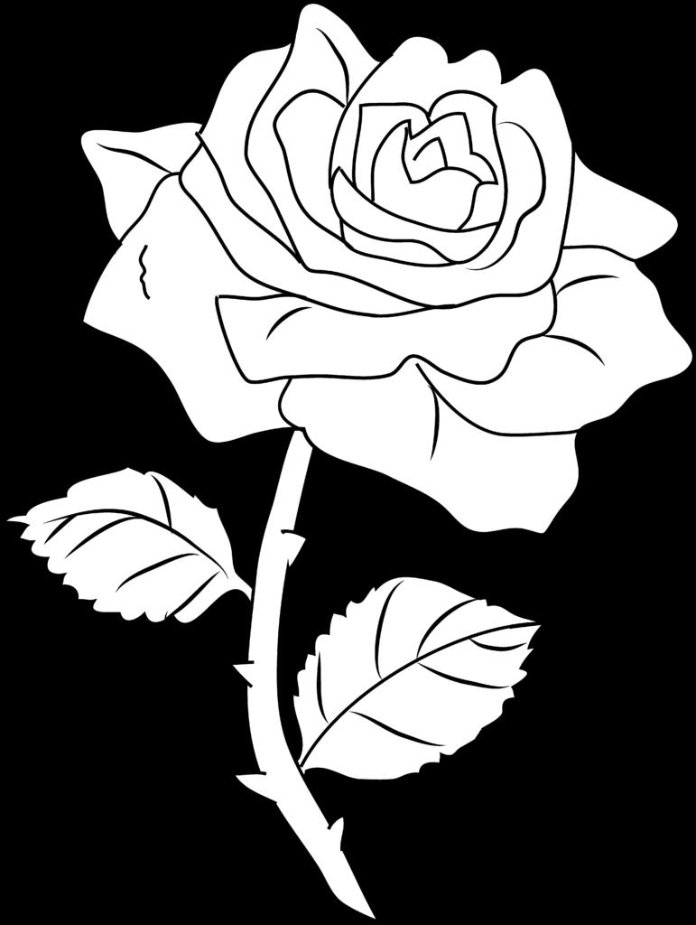 Rose Art Images  Clipartsco