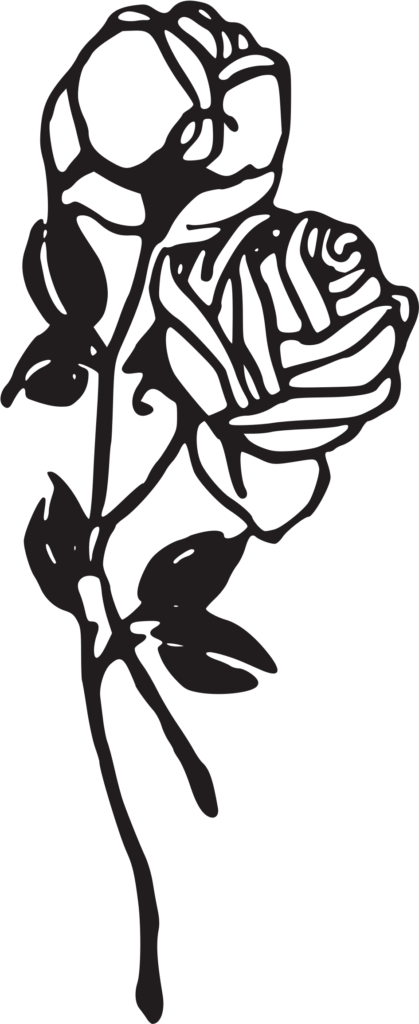 Two Roses Big Image  Black And White Rose Tattoo Png