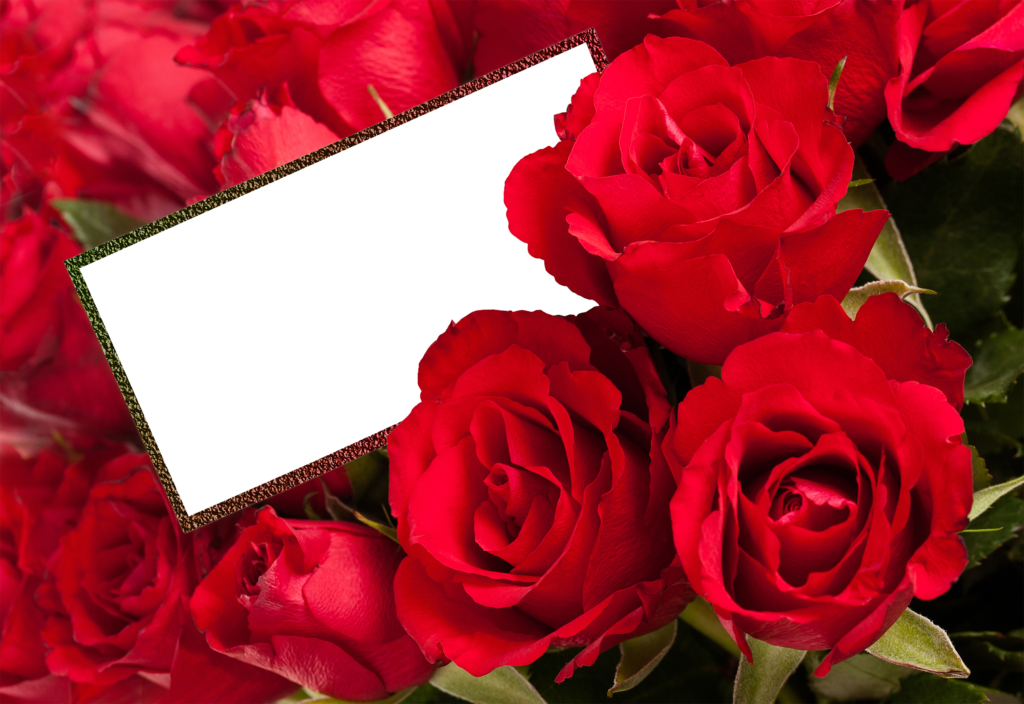 Rose Frames Wallpapers High Quality  Download Free