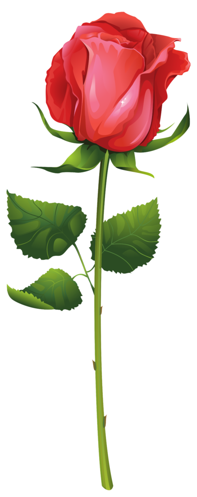 Rose Stem Clipart  Free download on ClipArtMag
