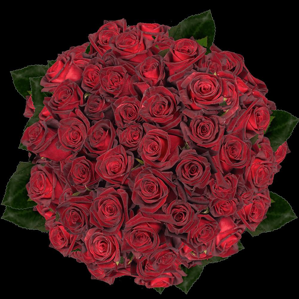 Premium Long Stem Black Roses  GlobalRose