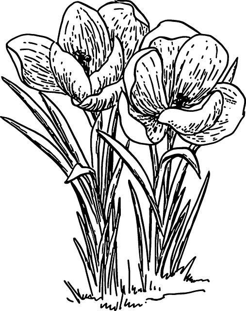 Free Image on Pixabay  Crocus Flower Plant Bulb