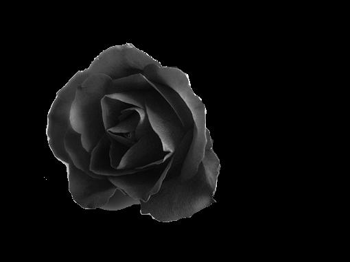 black roses by hisgravemistake on DeviantArt