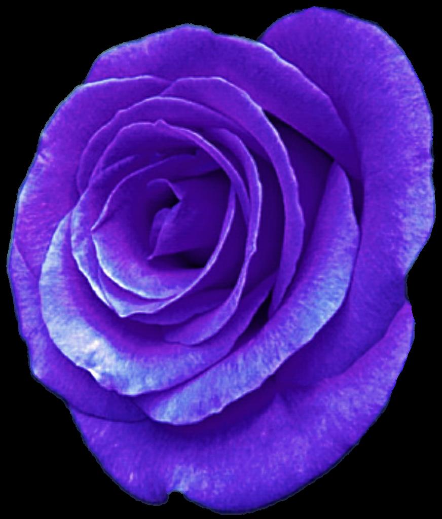 Purple Rose by jeanicebartzen27 on DeviantArt