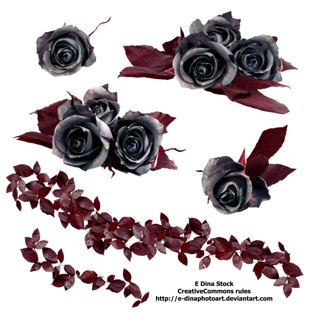 PNG Stock Black Roses by EDinaPhotoArt on DeviantArt