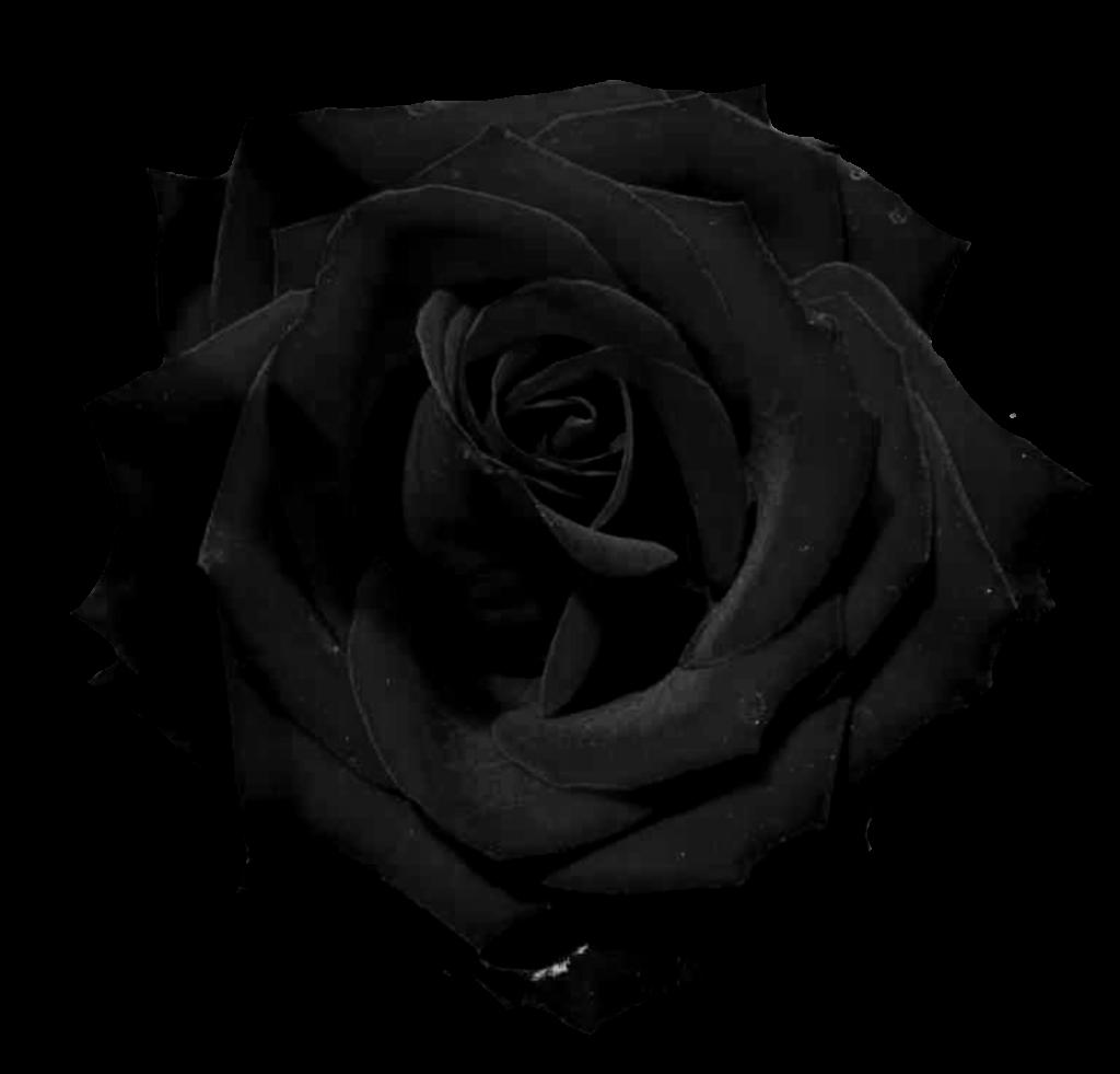 el jardin de rossy rosas negras png