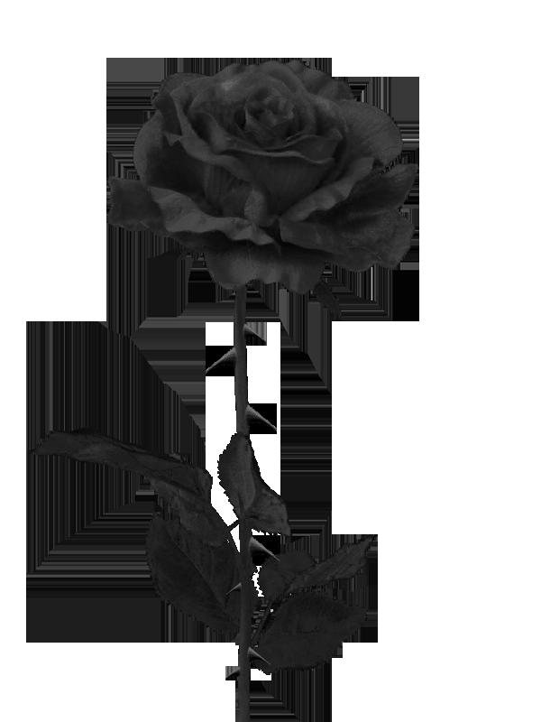 Black Rose PNG by PiXasso79Stock on DeviantArt