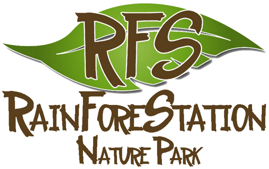 Download High Quality Nature clipart rain forest