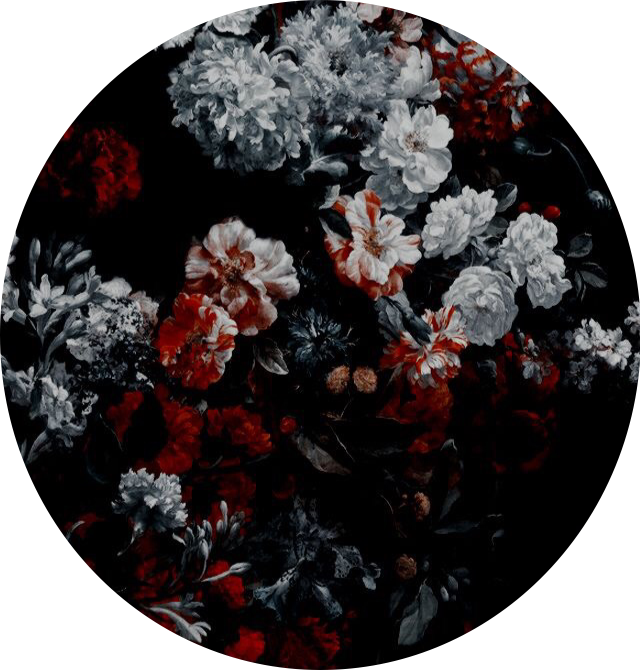 flowers black red white background rose aesthetic stick
