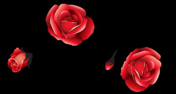 Rose Black Rose Blog Heart Love for Valentines Day ... - Red Roses Black and White