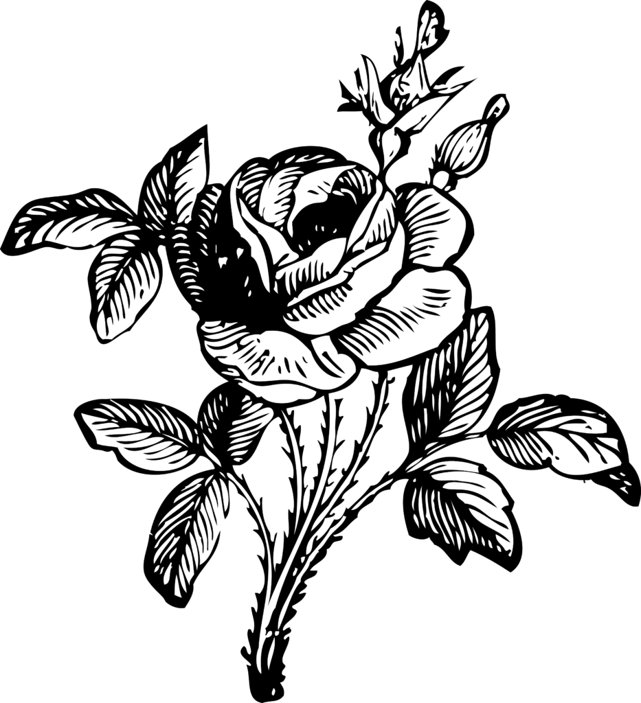 Rose 2 Black White Line Art Coloring Book Colouring