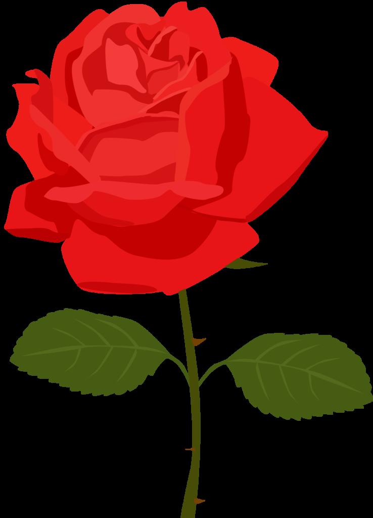 Rose clipart cartoon Rose cartoon Transparent FREE for