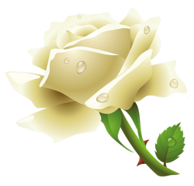 Download White Rose Png Image HQ PNG Image  FreePNGImg