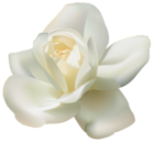 Beautiful White Rose PNG Clipart Image  Gallery