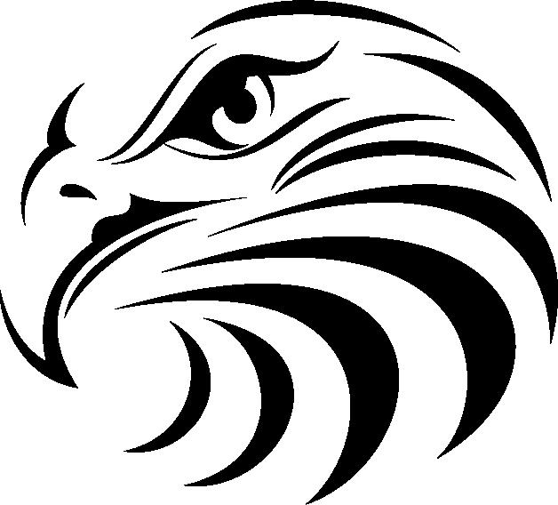 Bald Eagle Manly Warringah Sea Eagles Whitetailed Eagle