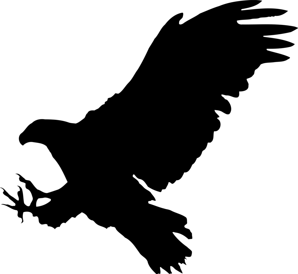Bald Eagle Bird Silhouette  Hawk png download  24002208