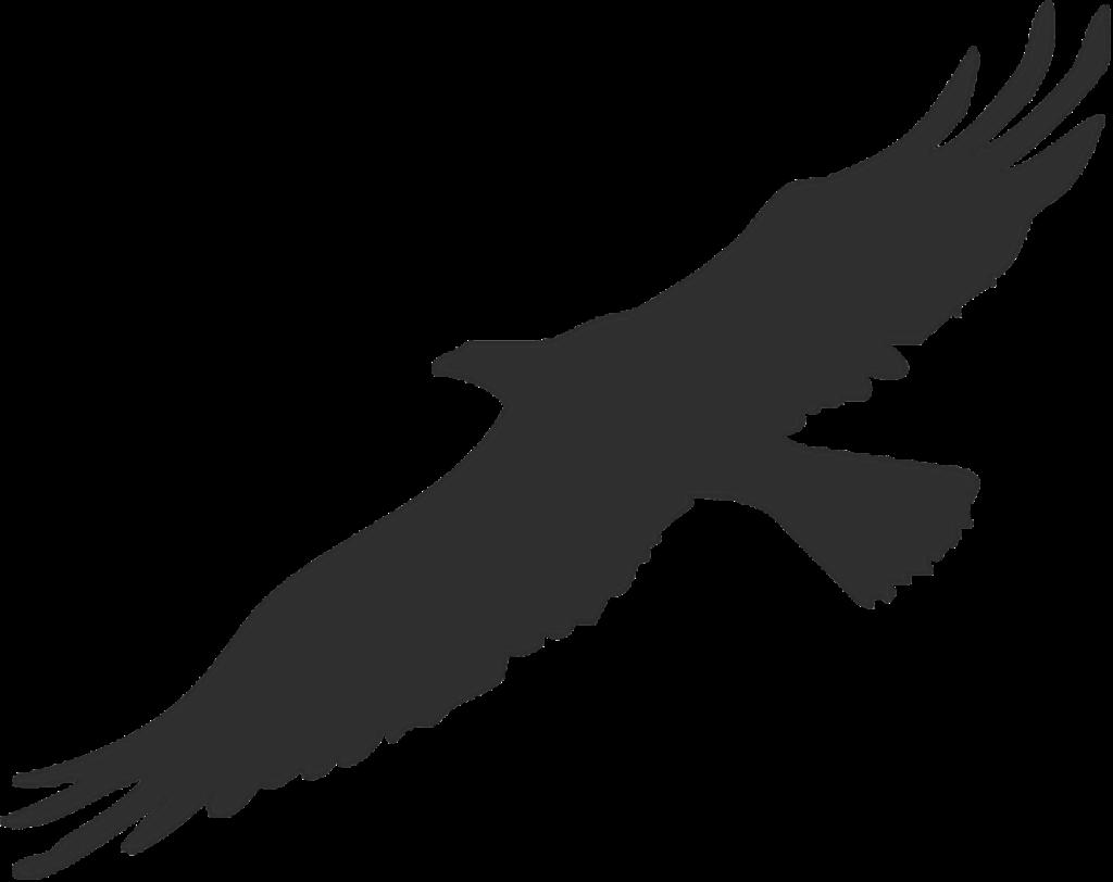Bird Bald Eagle Silhouette Clip art  american eagle png